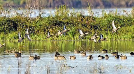 The Hunt For September Teal